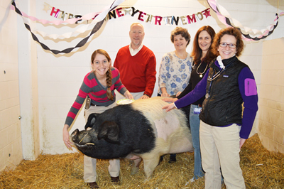 Nemo the pig with clinicians and Former Dean Kotlikoff