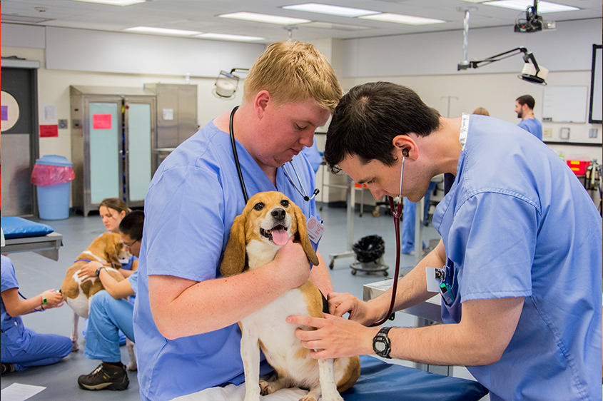 First year students in canine lab
