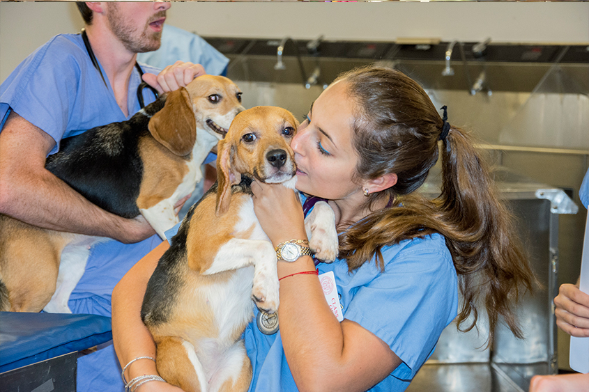 What does the education of a veterinarian involve?