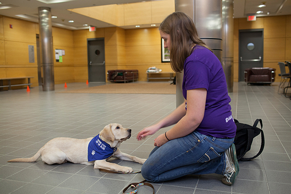 students train guiding eyes puppies