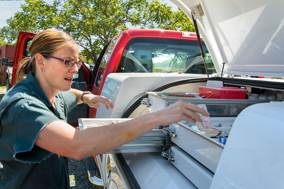 Jessica McArt, chief of Cornell's ambulatory clinic, gets supplies out of the service truck during a farm call.