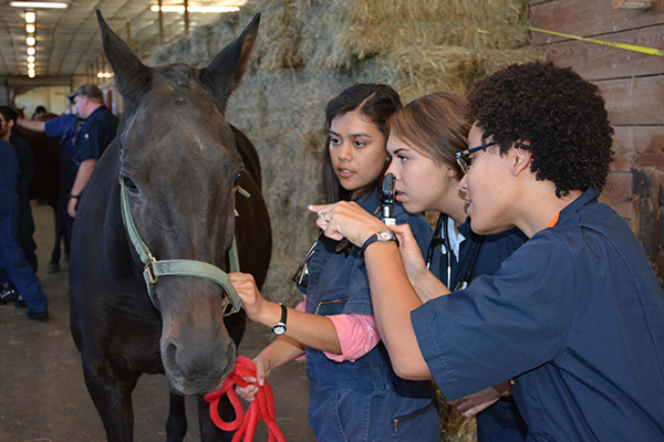 Students examine a horse in first year lab