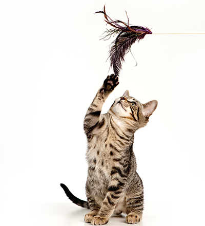 Feline Behavior Problems: Destructive Behavior | Cornell University ...
