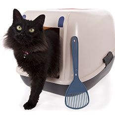 Cat exiting litter box