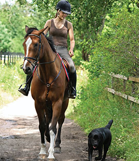 Woman riding horse with black dog