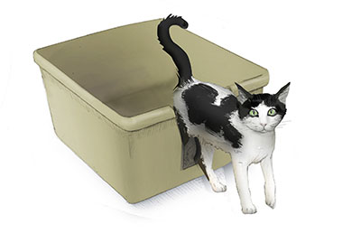 Joint Pain May Make It Difficult For Your Older Cat To Get In And Out Of A Litter Box Need With Low Sides Or Cut