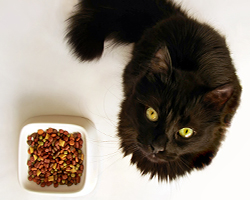 Can You Eat Cat Food