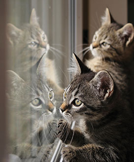 cats waiting by window