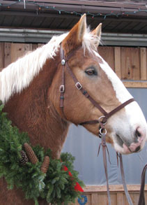 Krissy - 10-year-old Belgian Mare