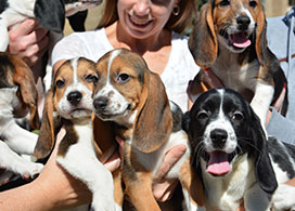 Four puppies born via in vitro fertilization