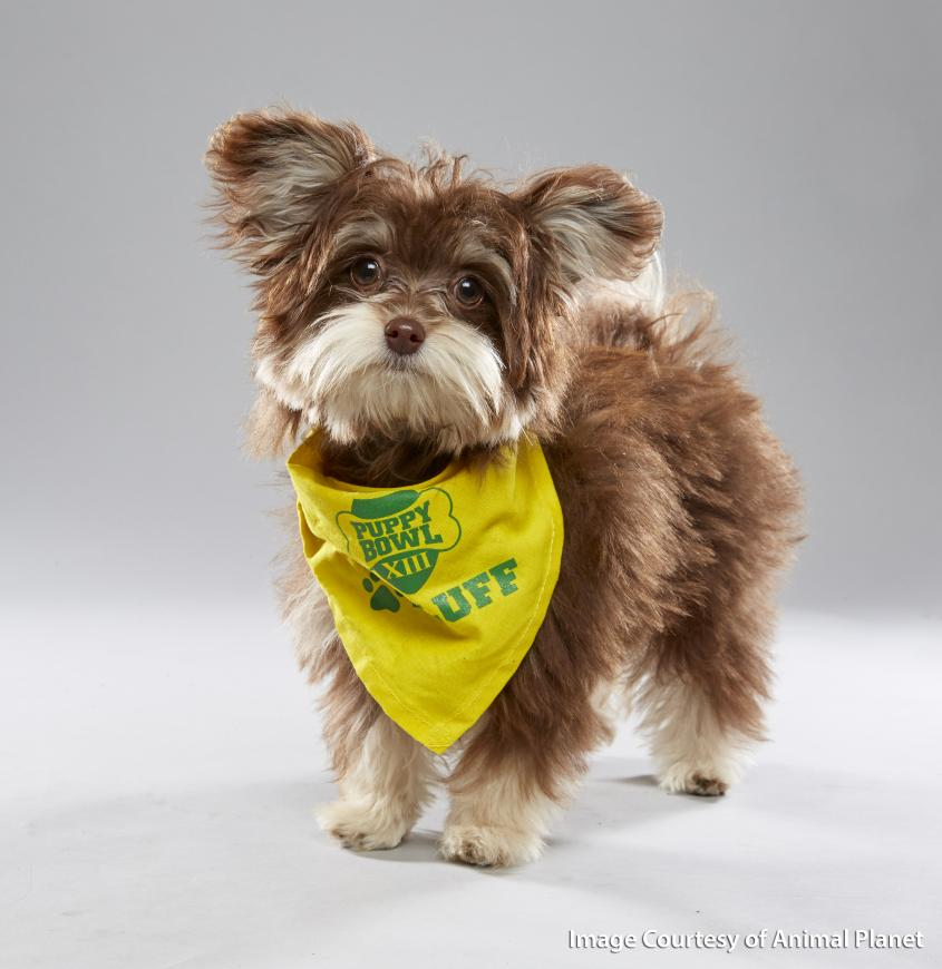 "Slippers, a Puppy Bowl player for ""Team Fluff"""